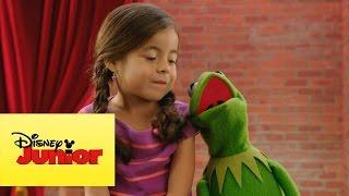 Momento Muppet - Caras bobas