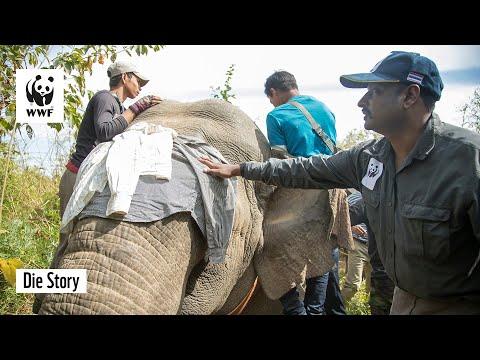 Xxx Mp4 Der Elefantenflüsterer Von Myanmar 3gp Sex