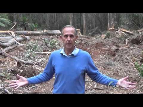 Bob's Journey Into Lapoinya