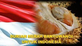 DURIAN MERAH BANYUWANGI UNTUK INDONESIA