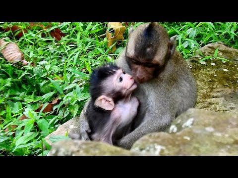 Xxx Mp4 Meaning Full Timo Baby Monkey Accept Lonely Jessie Like Sister And Brother 3gp Sex