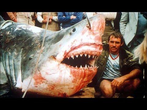 11 Giant Sharks Caught