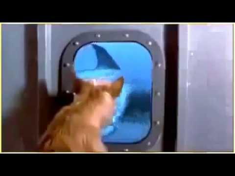 Video anjing yang akan diterkam ikan hiu dan diselamatkan oleh ikan lumba lumba