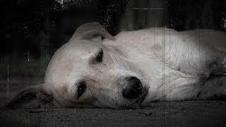 لن تصدقوا ماذا يفعل الكلب قبل وفاته.. لو شاهدته قلبك يتقطع من الأحساس !!