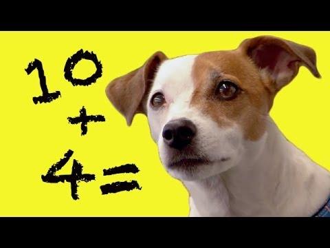 Dog Does Maths - Extraordinary Animals - Series 2
