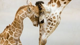Most Loving Animal Parents And Their Kids