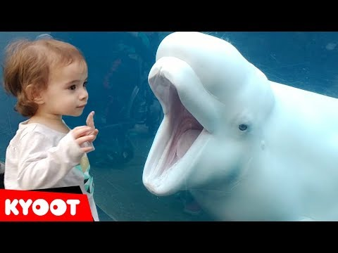 Funny Kids at the Aquarium Girl SPOOKED By A Beluga Whale