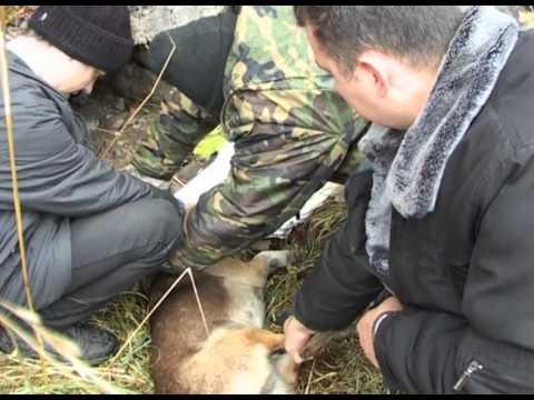 Xxx Mp4 Служба Спасения Освобождение собаки от проволоки 3gp Sex