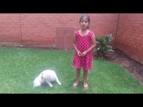 Small girl giving training to dog - playing with dog Multise