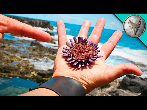 SPIKED by a Sea Urchin