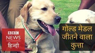 Babu: The First Gold Medalist Dog Of Delhi Police (BBC Hindi)