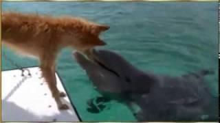 El Perro y el Delfín