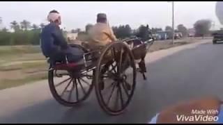 Horse Race Try(Kharpur Sindh)