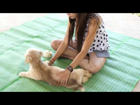 Amazing Funny girl and Dog Group - kindly girl give special food and play with dog  at home