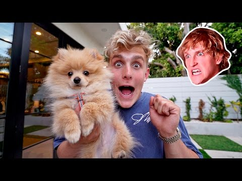 I STOLE MY BROTHERS PUPPY **PRANK WARS** (HE FREAKED OUT)
