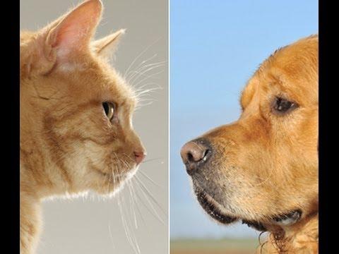 NEĆETE VEROVATI Igra psa i mačke Smeh Do Suza
