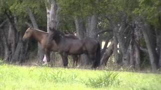 Horses Don't Treat Woman Different - Horses Kick & Don't Care that You are a Woman - Why?
