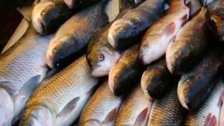 Fish market in India