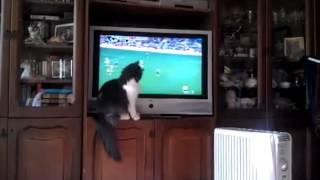 MAÇ İZLEYEN KEDİ  (TEAM FOLLOWING THE CAT)