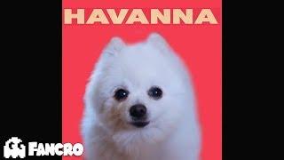 Havana - Cover Perros