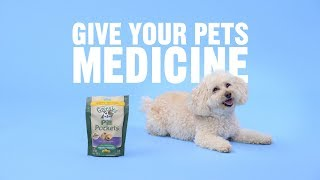 How Can You Get Your Pets to Take Their Medicine?