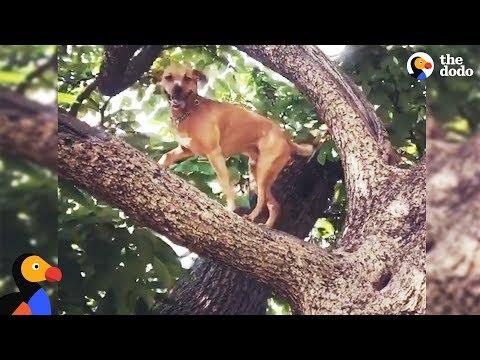 Xxx Mp4 Dog Climbs Trees To Overcome His Anxiety RINGO The Dodo 3gp Sex