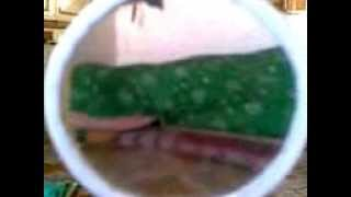 Ankur Video from My Phone