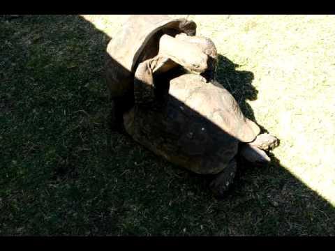 Xxx Mp4 Oh L Amour Turtle Sex 3gp Sex