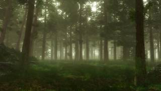 Forest Sounds   Woodland Ambience, Bird Song, Nearby Village   3 Hours