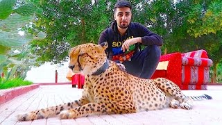 EXOTIC PETS OF DUBAI !!!