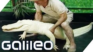 Wie gefährlich ist das Albino Krokodil? | Galileo | ProSieben