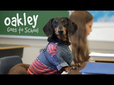 Xxx Mp4 Ep 10 OAKLEY GOES TO SCHOOL Cute Dog Video School Day 3gp Sex