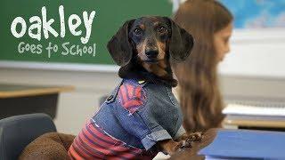 Ep 10: OAKLEY GOES TO SCHOOL - Cute Dog Video School Day