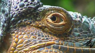 Sony 1080i HD close-ups & Macros - Nature Unleashed -