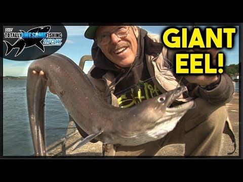 Fishing for GIANT EELS!