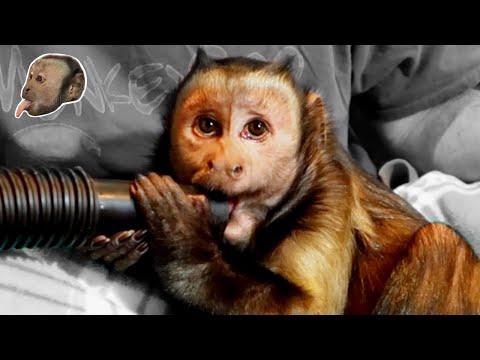 Xxx Mp4 Monkey Fun With ShopVac 3gp Sex