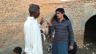 "Watch ""Goat Farming In Pakistan Urdu/Hindi"" on YouTube"