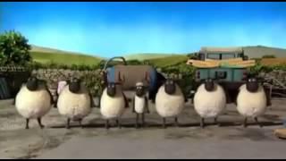 خروف العيد مضحك
