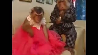Samundi muthu nayage