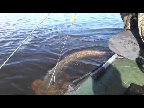 ловля сома на квок с лодки видео бехтер