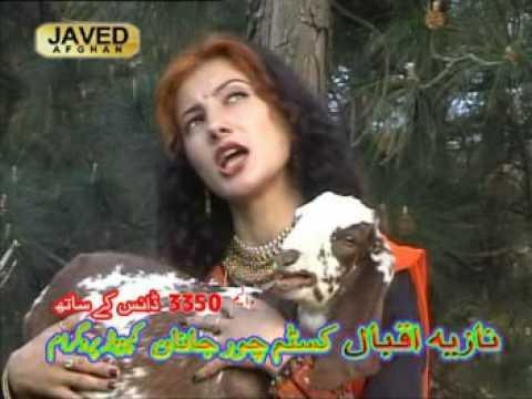 Xxx Mp4 Pashto Song Nazia Iqbal Tapay 3gp Sex