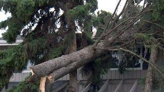 Windstorm leaves path of destruction in Red Deer, Alta.