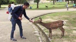 Japanese Deer !!