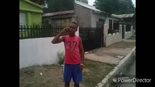 Parodia  dominicana