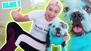 MY DOG IS  BLUEBERRY! I DYED  MY HAIR AND MY DOG FRANKLNS HAIR!