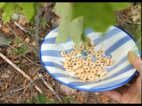 Foraging You Suck at Cooking episode 16