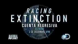 Racing Extinction trailer en español
