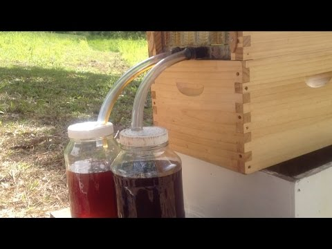 Flow Hive Don Anderson Harvesting Honey