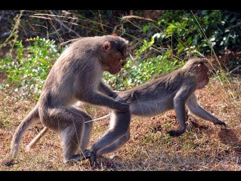 Xxx Mp4 Funny Monkey Hot Video Whatsapp Funny Video Whatsapp Funny Monkey Sexi Video 3gp Sex