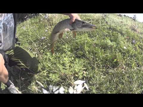 ловля на реке сура видео